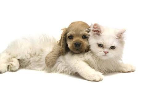 Приюты для животных в Москве. Обзор гостиниц для животных в Москве