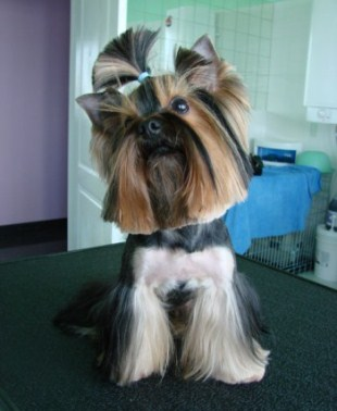 Груминг в парикмахерских для собак в Москве