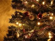 Где купить новогоднюю ёлку в Москве?