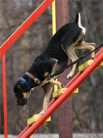 Где осуществляют дрессировку собак в Москве?