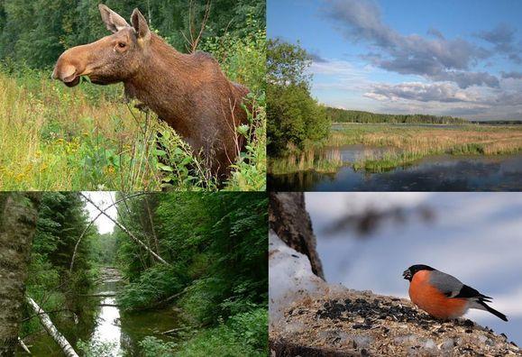 Лосиный остров национальный парк.  Фотохостинг - фотографии, картинки, изображения.