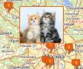 Где находится Птичий рынок в Москве?