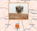 Где купить мясо и яйца страуса в Москве?