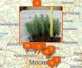Где продают саженцы в Москве?