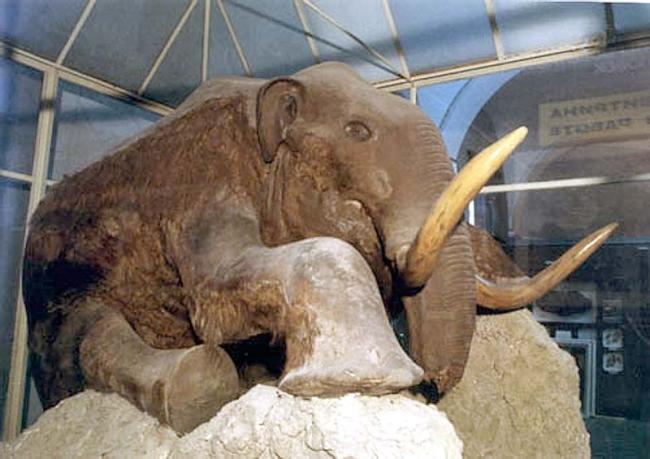Где расположены зоологические музеи Москвы?