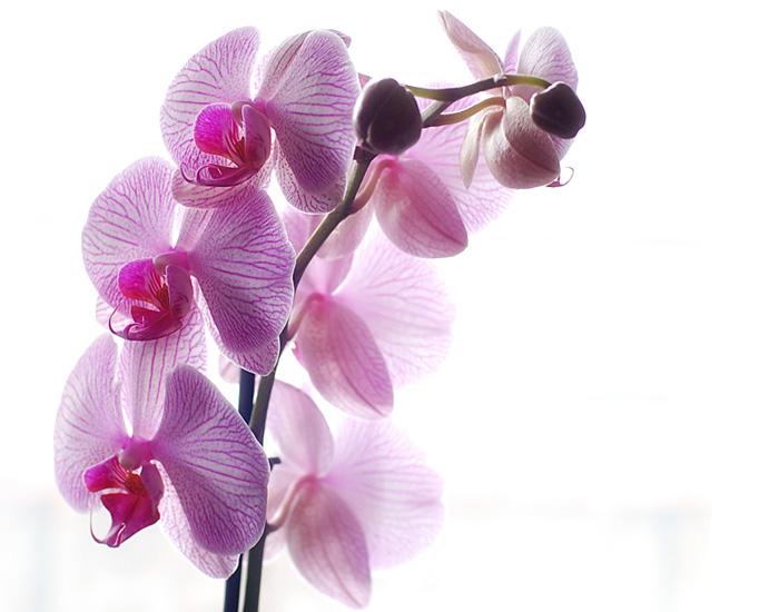 Где купить орхидеи в Москве?