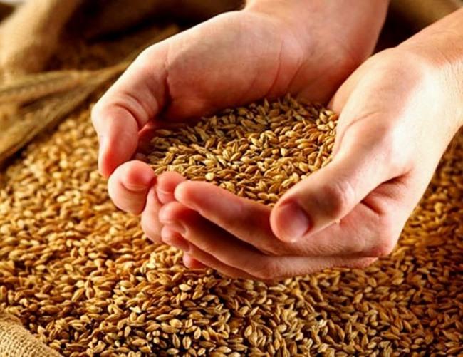 Где купить зерно в Москве?