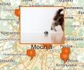 Где купить котенка в Москве?