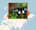Где можно посмотреть на бабочек в Москве?