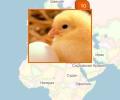 Где расположены крупные птицефабрики Москвы?