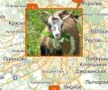 Где купить овцу или козу в Москве?