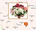 Где лучше всего купить комнатные и горшечные цветы в Москве?
