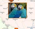 Где купить попугая и клетки в Москве?